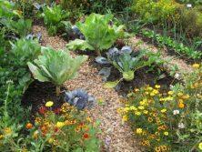 mix orto giardino