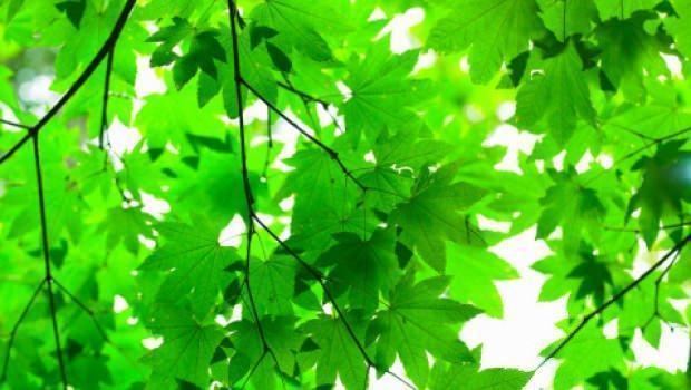 Acquisto piante arboree for Acquisto piante