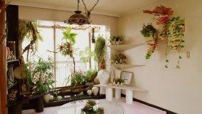 Cura delle piante durante le ferie