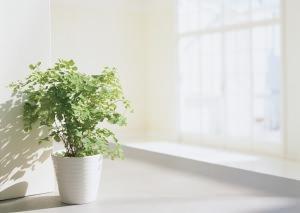 pianta in casa