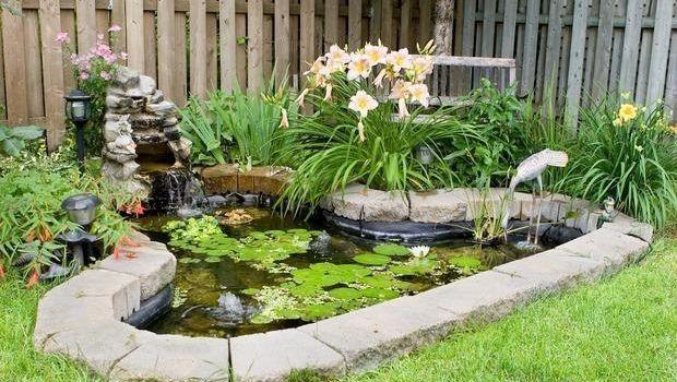 Felci e ninfee in giardino - Giardino delle ninfee ...