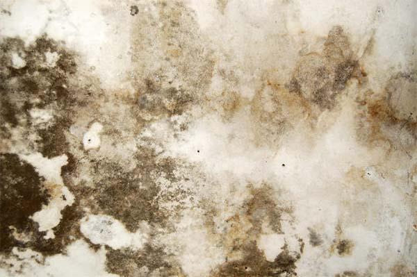 Umidità di risalita capillare