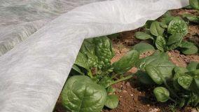 Il TNT, un tessuto non tessuto in giardino