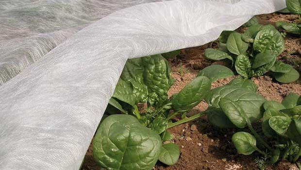 Tnt tessuto non tessuto in giardino - Telo tessuto non tessuto giardino ...