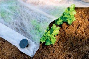 Tessuto non tessuto per giardino prezzi