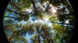 Conifere in giardino
