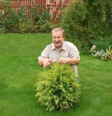 conifere con ridotte dimensioni