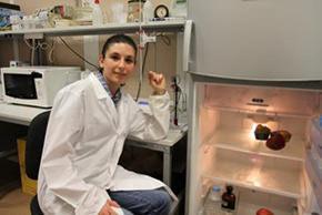 tecnologia della refrigerazione