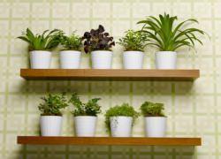 Mensole con piante