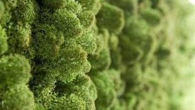 Sistemi fonoassorbenti vegetali