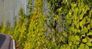 barriere acustichde vegetali outdoor