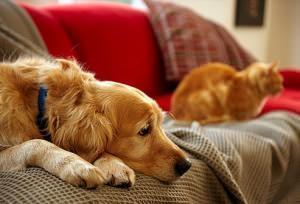 cane e gatto sul divano