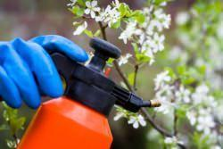Concimazione delle piante da fiore