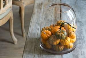 zucche ornamentali in vaso