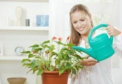 Cura delle piante domestiche