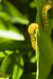 Lombrichi su pianta