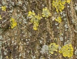 Funghi su tronco
