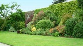 Consigli utili per realizzare siepi miste in giardino