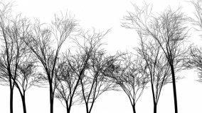 Rami, alberi e inedito design
