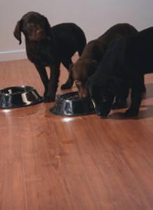 pavimento laminato adatto ad animali