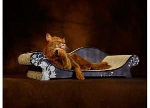 tiragraffi canapè per gatti, cat on
