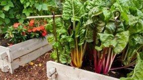 Progettare un orto a prode rialzate