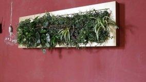 Quadri vegetali come complementi d'arredo indoor