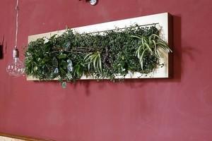 Ortisgreen. Quadro vegetale