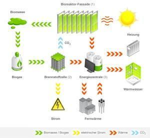 Ciclo dell'energia casa ad alghe