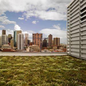 tetto verde, copertura a sedum