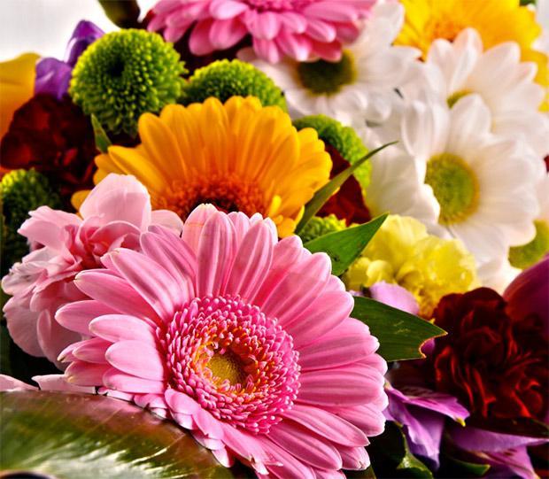 Gerbera in bouquet