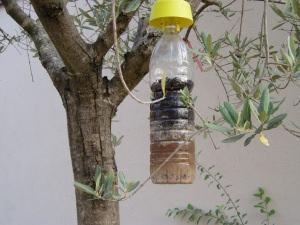 Trappole per insetti for Esche per formiche