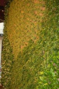 HW STYLE srl - Pareti vegetali
