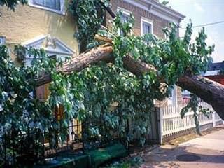 Danni provocati dalla caduta di un albero