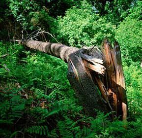 il deterioramento di un tronco