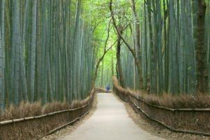 rinnovabilità del bambù