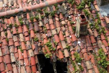 muschio ed erbacce sul tetto