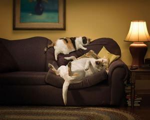 cane in casa