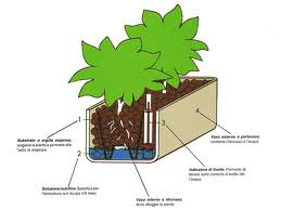 struttura vaso in idrocoltura