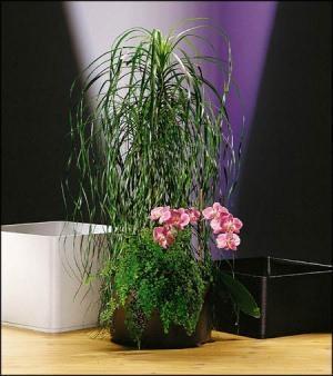 piante in idrocoltura