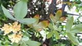rosa banksiae per gli angoli bui 1 di Bobo4