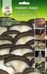 Chiodi di micelio pleurotus 20 pz 1