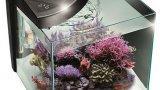 Thumbnail New more 30r acquario marino 1