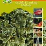Chiodi di grifola frondosa (maitake)