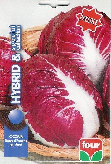 Cicoria rossa di verona precoce selez santi 1