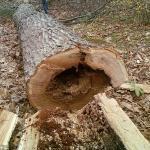 Potatura e rimozione alberi