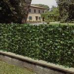 Arella sempreverde polipropilene stabilizzata